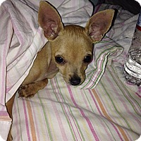 Adopt A Pet :: Bernice - Scottsdale, AZ