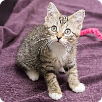 Adopt A Pet :: Spring - Chicago, IL