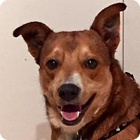 Adopt A Pet :: Lucia - Minneapolis, MN