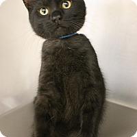 Adopt A Pet :: Rupert - Medina, OH