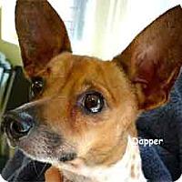Adopt A Pet :: Dapper - Warren, PA