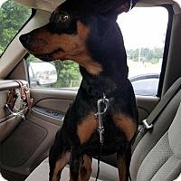 Adopt A Pet :: Tank - Richmond, KY