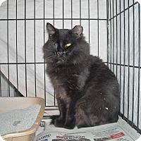 Adopt A Pet :: Ace - Riverside, RI