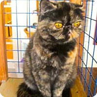 Adopt A Pet :: Madeline - Davis, CA