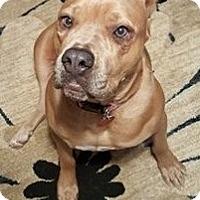Adopt A Pet :: Gidget - Norwood, GA