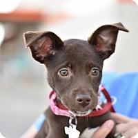 Adopt A Pet :: Eva - Frisco, TX