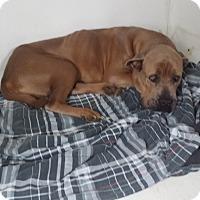 Adopt A Pet :: Jolie - Norwood, GA