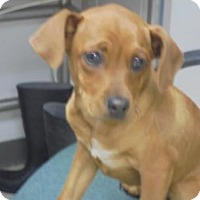 Adopt A Pet :: Yogi - Gulfport, MS