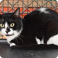 Adopt A Pet :: 10310244 - Brooksville, FL