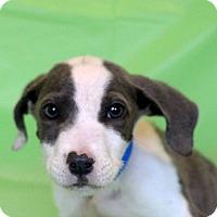 Adopt A Pet :: Kato - Waldorf, MD
