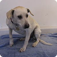 Adopt A Pet :: Wimpy/Wally - Oakland, AR
