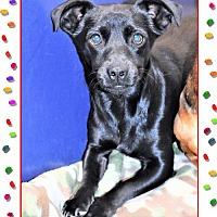 Adopt A Pet :: Theo - San Jacinto, CA