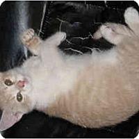 Adopt A Pet :: Herbie - Davis, CA