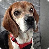 Adopt A Pet :: Agnes - Indianapolis, IN