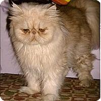 Adopt A Pet :: Fifi - Medway, MA