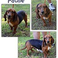 Adopt A Pet :: Paulie - Marietta, GA