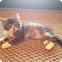 Adopt A Pet :: CHANDLER - Hamilton, NJ