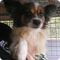 Adopt A Pet :: Broghan aka Brody - Gainesville, FL