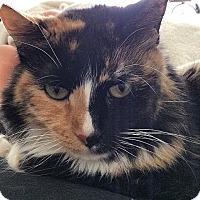 Adopt A Pet :: Elizabeth - Los Angeles, CA