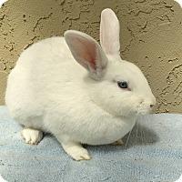 Adopt A Pet :: Sky - Bonita, CA