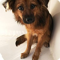 Adopt A Pet :: Candycane - Westminster, MD