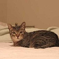 Adopt A Pet :: SweetPea - New City, NY