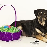 Adopt A Pet :: Queenie - Baton Rouge, LA
