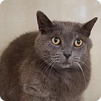 Adopt A Pet :: Masey - Elyria, OH