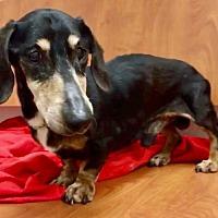 Adopt A Pet :: Patrick - Weston, FL