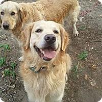 Adopt A Pet :: Jake - Fort Hunter, NY