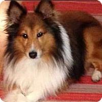 Adopt A Pet :: Puffy - Indiana, IN