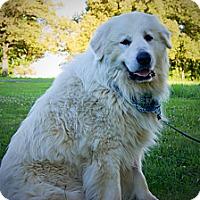 Adopt A Pet :: Bubbles - Princeton, KY