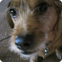 Adopt A Pet :: Joey - SNUGGLE BUG! - Oak Creek, WI