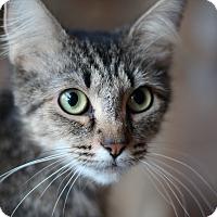 Adopt A Pet :: Sugar Pie - Richmond, VA