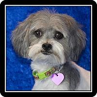 Adopt A Pet :: Melody - Covina, CA