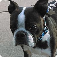 Adopt A Pet :: Woody - Jackson, TN