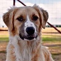 Adopt A Pet :: Homer - Clifton, TX