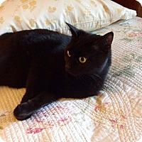 Adopt A Pet :: Katerina - Colmar, PA