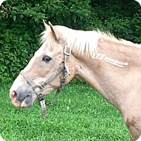 Mustang for adoption in Gallatin, Tennessee - Champ