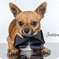 Adopt A Pet :: Cristobal - Houston, TX
