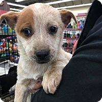 Adopt A Pet :: Anna - Fresno, CA