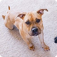 Adopt A Pet :: Nala - Grand Rapids, MI