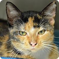 Adopt A Pet :: 10310439 - Brooksville, FL