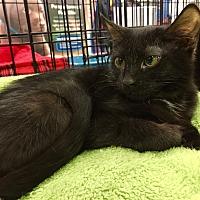 Adopt A Pet :: Precious - Smyrna, GA