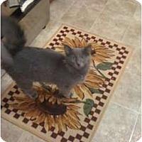 Adopt A Pet :: Bonnie - Mobile, AL