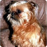 Adopt A Pet :: BEAMER - ADOPTION PENDING - Little Rock, AR