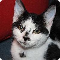 Adopt A Pet :: Baylor (LE) - Little Falls, NJ
