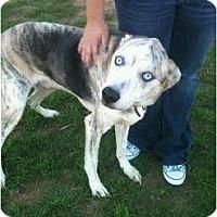 Adopt A Pet :: Buddy - Arlington, TX