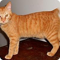 Adopt A Pet :: Darwin - Chattanooga, TN