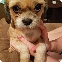 Adopt A Pet :: Cara - Greensboro, GA